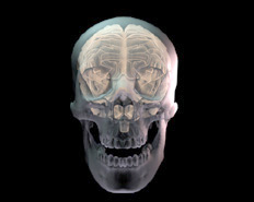 clip id: 609-38; animated-pictures-of-a-skull illustration